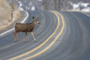 deer crashes